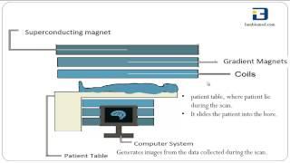 Basics of MRI (Magnetic Resonance Imaging)