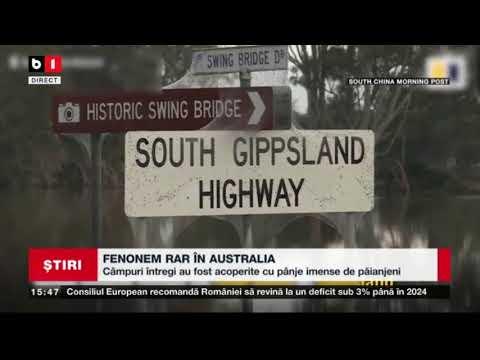 FENOMEN RAR IN AUSTRALIA: CIMPURI INTREGI AU FOST ACOPERITE CU PANZE IMENSE DE PAIANJENI_Stiri B1