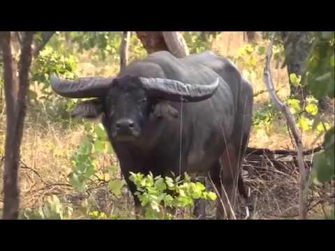 Tropical Hunting Safaris Pty Ltd