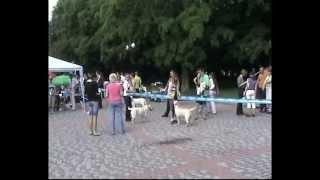 питомник лабрадоров  www mastiff dog com  Запорожье