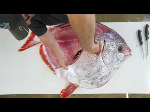Opah Breakdown