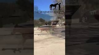 The Movement 2019 April 29-30 featuring Monty Roberts + 7 presenters