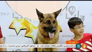 Iran Dog Breeding & Training report گزارشي از پرورش و تربيت سگ ايران