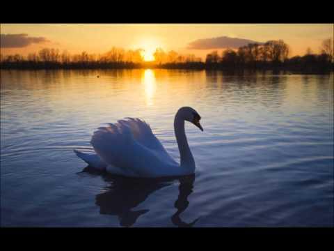 Jean Sibelius - Le Cygne de Tuonela / The Swan of Tuonela