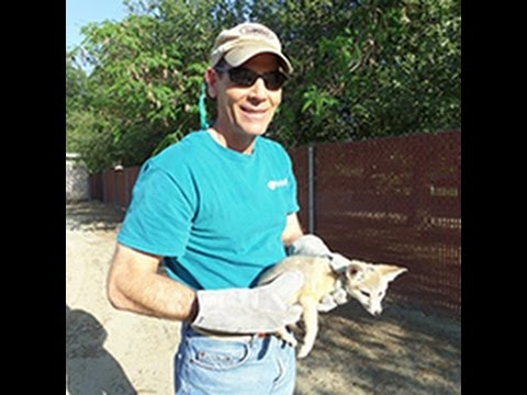 Conservation Lecture Series  San Joaquin Valley Kit Fox
