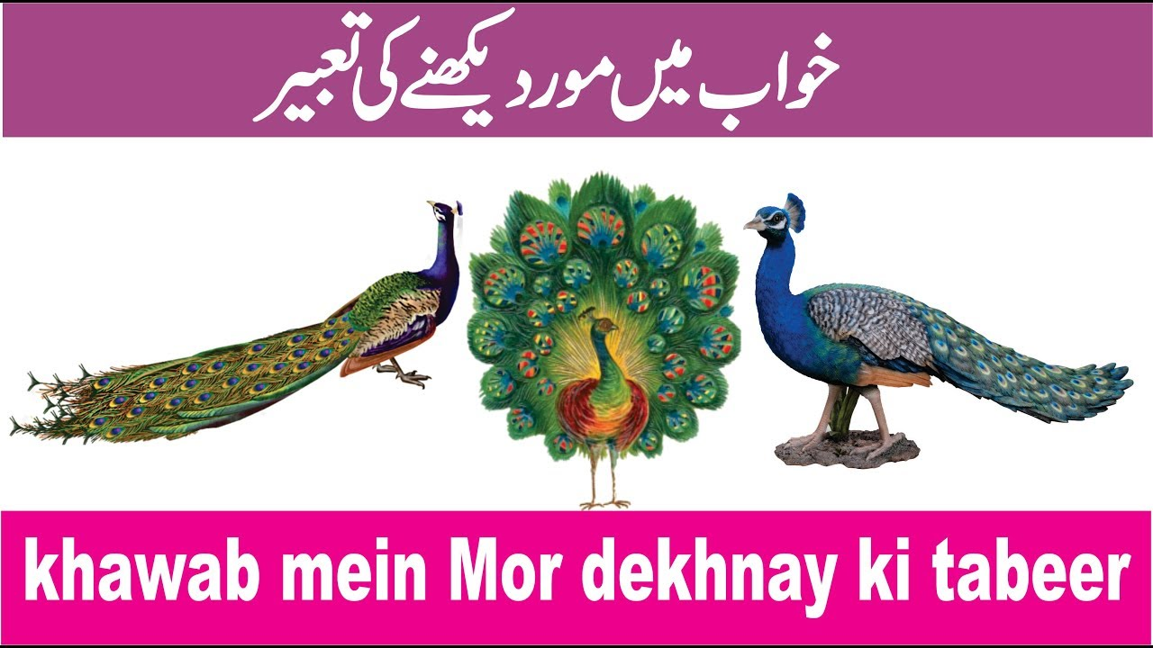 Explanation of seeing peacock in dream  خواب میں مور دیکھنے کی تعبیر   khawab mein mor dekhna