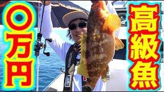 釣ったイカをエサにしたら〇万円の高級魚が釣れた!