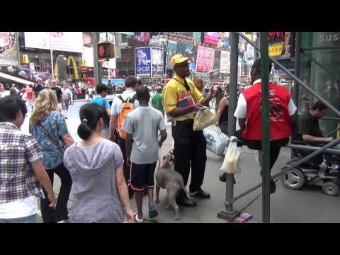 pitbull takes manhattan (trained pitbull walks herself in new york city)