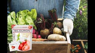 Силурон сок - питание для суставов! Продукция Авроры