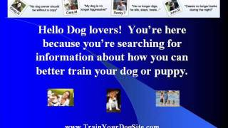 Best Dog Training For Utah Potty Training Your Dog