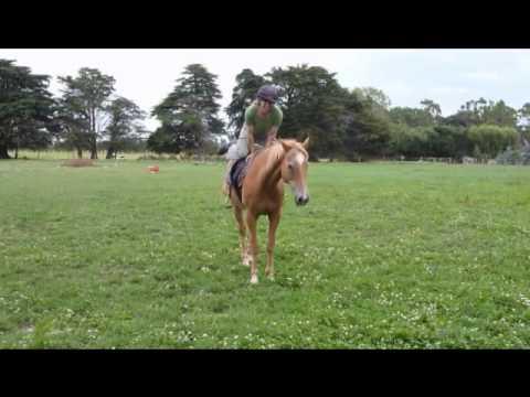 Abi's Natural Horsemanship, New Zealand - riding