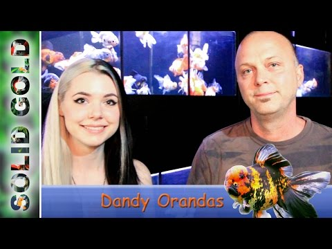 Interview with Ken Fischer of Dandy Orandas