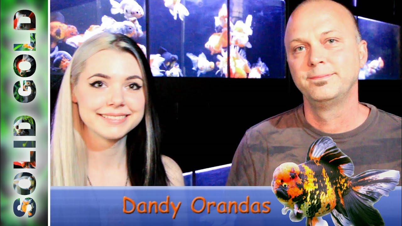 Images of Dandy Orandas - #rock-cafe