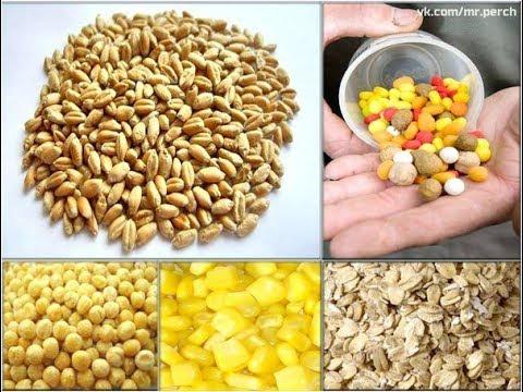 Супер насадка для ловли плотвы!!! Как правильно насадить пшеницу на крючок. Чтобы не слетала!!!