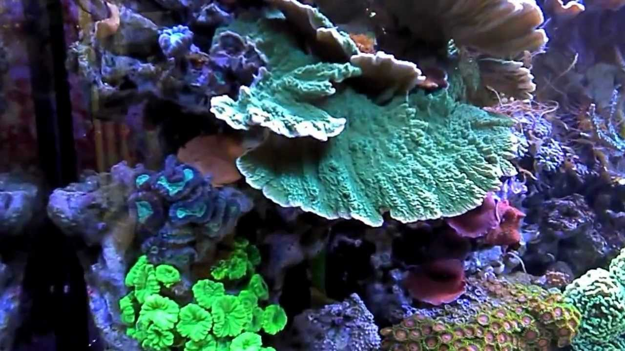 Sps Lps Aquarium 660l By Coral Reef Youtube