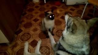 Собака съела корм кота!
