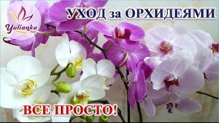 видео С вами я ваш Ёжик...Орхидея отцвела...эх...(((