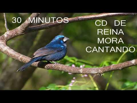 CD De Reina Mora Cantando