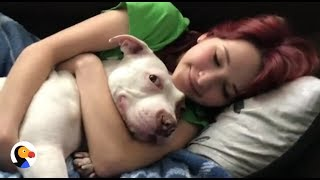 Pit Bull Can't Stop Kissing Favorite Girl | The Dodo