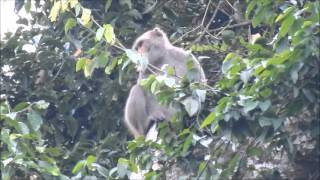Macaca threatened me , Tengjhih National Forest Recreation Area, Kaohsiung, Taiwan.