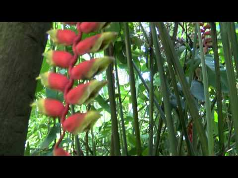 Discover Cayman - The Queen Elizabeth II's Botanic Park