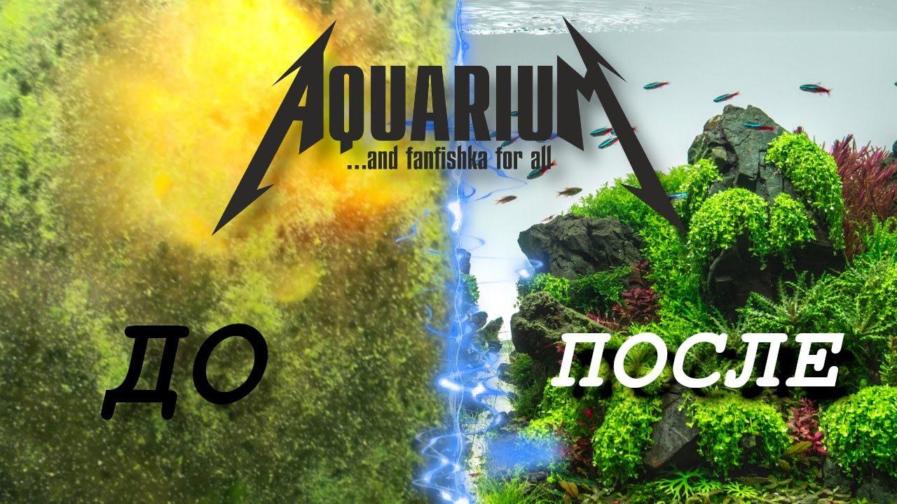Зеленый налет на стенках аквариума, камнях и растениях — избавляем от ксенококуса с гарантией 100%