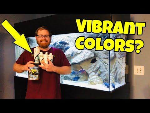 The Secret To SUPER COLORFUL African Cichlids (WILL IT WORK?)