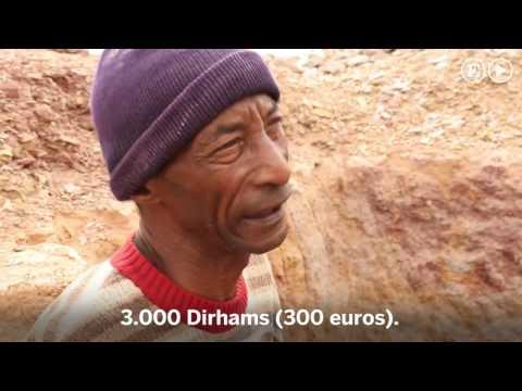Se vende animal extinto por un euro