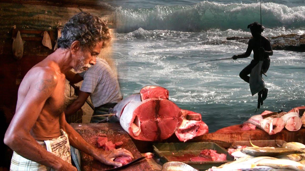 How to fish in big waves stilt fishing sri lanka st for Sri lanka fishing