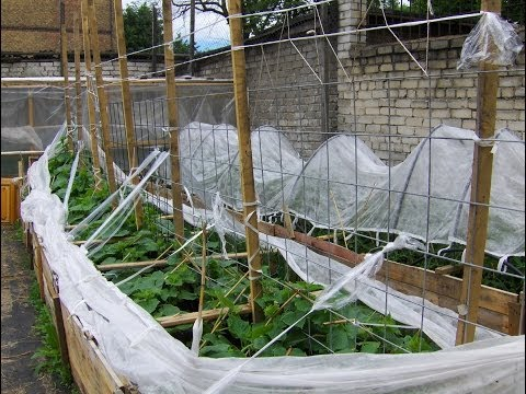 видео: Делаем огород, грядки- короба 6 часть.Огурцы на вертикальной опоре.garden.