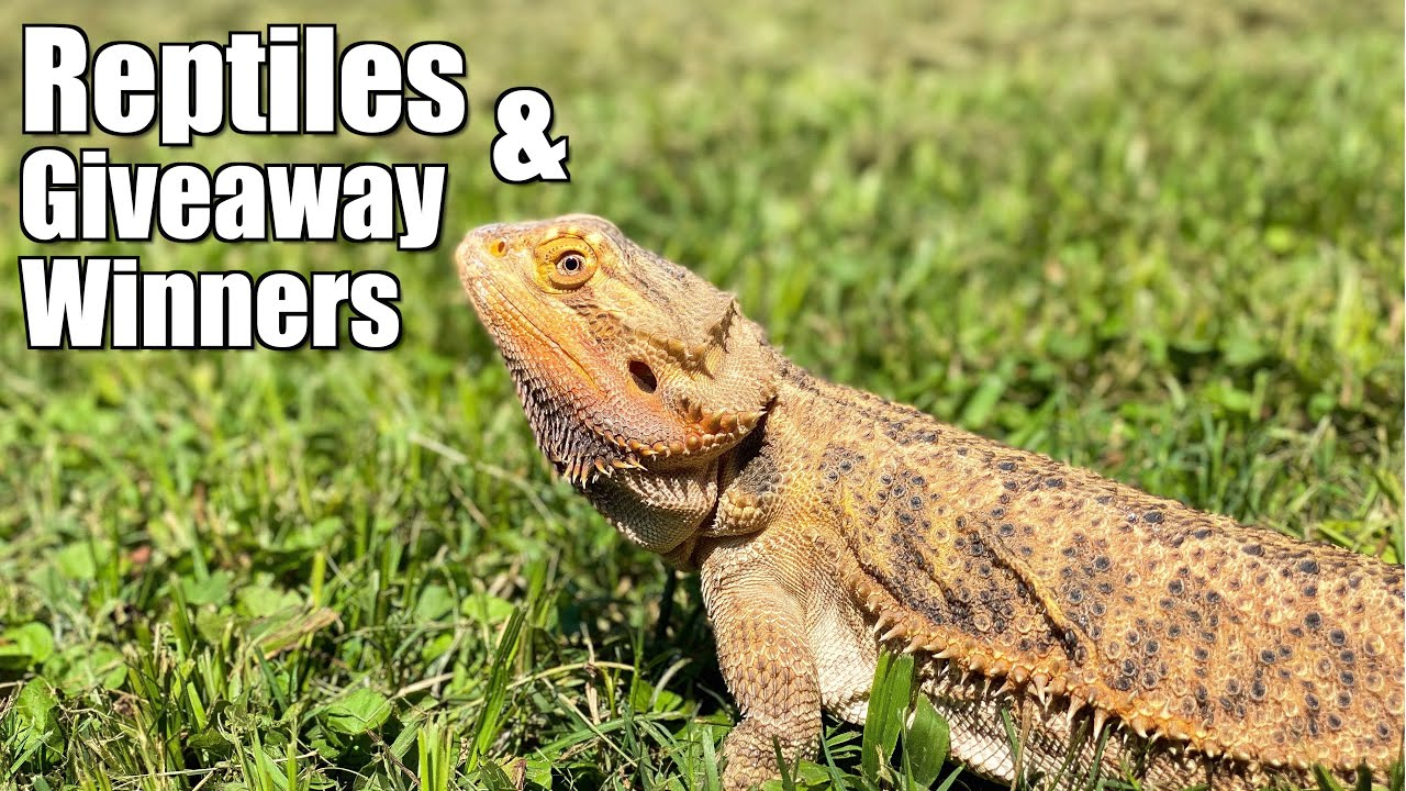 Hanging Out With Reptiles and Giveaway Winners