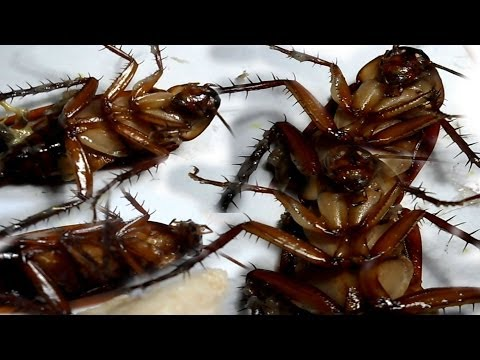 Get Rid Of Roaches From Your Homes Forever