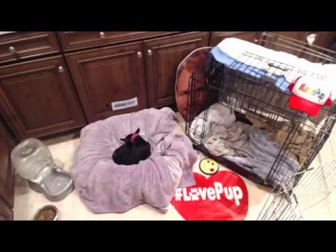 #LovePup Rescue Dog AVA Baby Watch!