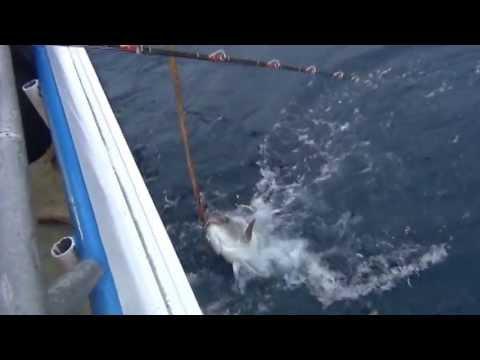 Hubbards marina john pass fl you should go deep sea for Deep sea fishing johns pass