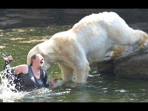 10-people-who-fell-into-animal-enclosures-at-zoos