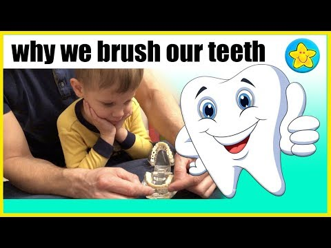 Learn About Teeth  Prevent Cavities In Children
