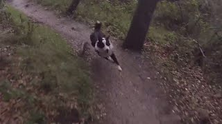 Here's a video of my 10 month old Border Collie running down the mo...
