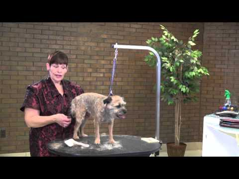 Dog Grooming - How to Do a Pet Strip/Clip on a Border Terrier