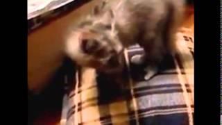 Самые опасные и бесстрашные котята на земле! Подборка забавных приколов .