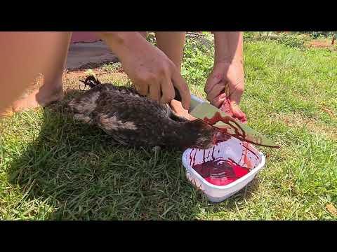 Como abater um frango!  *muito fácil*