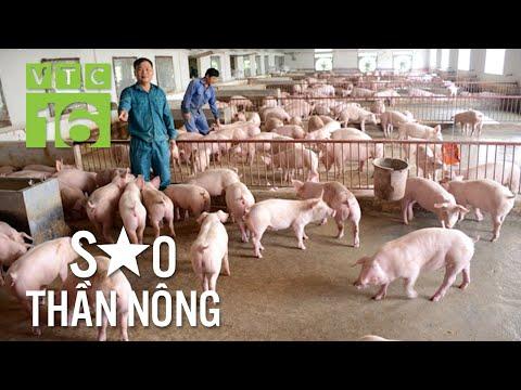 Vua lợn thu 10 tỷ/năm nhờ bí quyết đặc biệt | VTC16