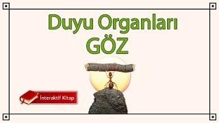 AYT Biyoloji Duyu Organları / Göz #sayfa40