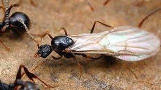 видео Что собой представляют черные жуки в доме/квартире, и как от них избавиться