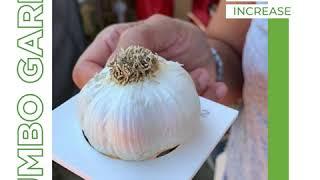 Food for Life Garlic Testimonial