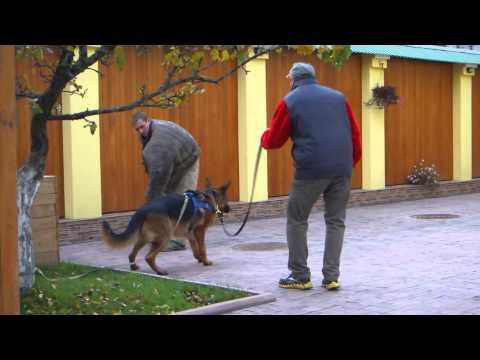 Работа в охране в Москве, вакансии, требуются охранники в