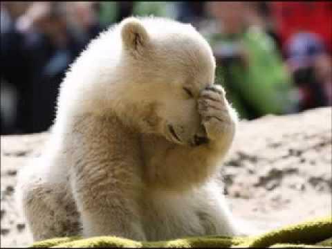 Mitch Benn - Baby Knut Must DIE