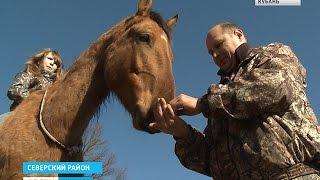 Второй шанс для лошадей: в Северском районе помогают животным(, 2016-02-26T09:25:39.000Z)