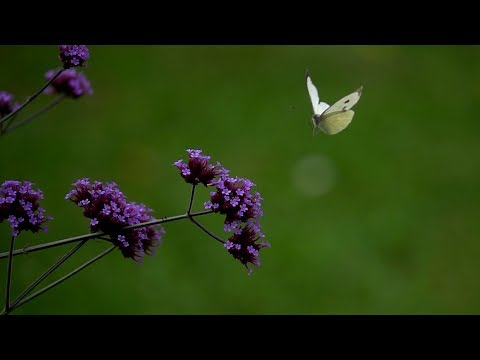 Sony Rx10iv And Some Slowmotion (hfr) Bugz In Flight