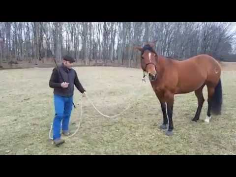 "Lunging for balance and relaxation using the ""magic wand"""
