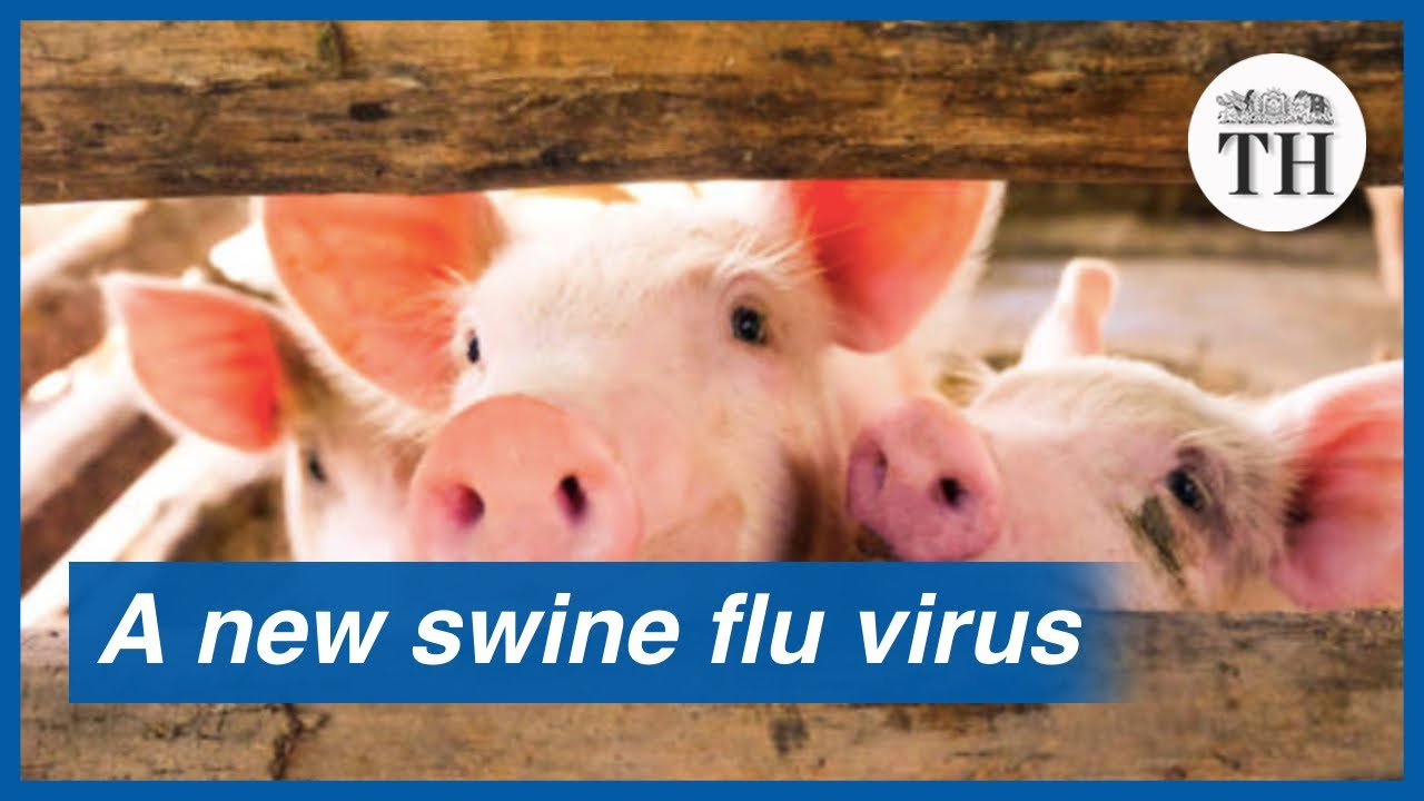 All About The New Swine Flu Virus Identified In China Youtube